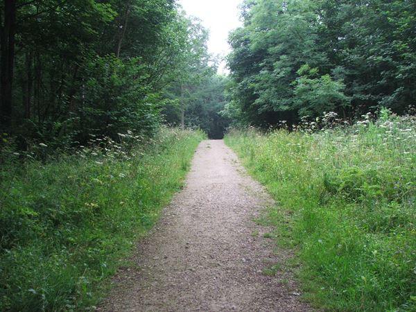 Image, UK, England, Derbyshire, Pleasley Park