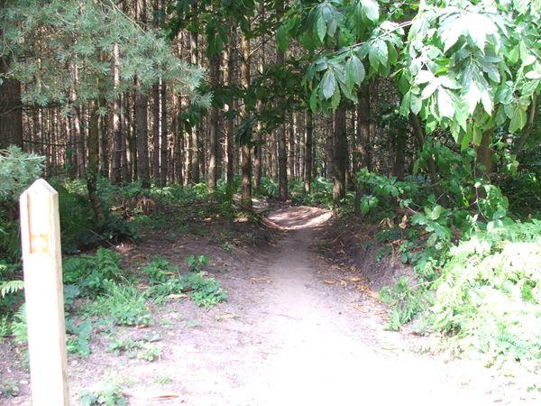 Image, UK, England, Notts, Sherwood Pine Forest