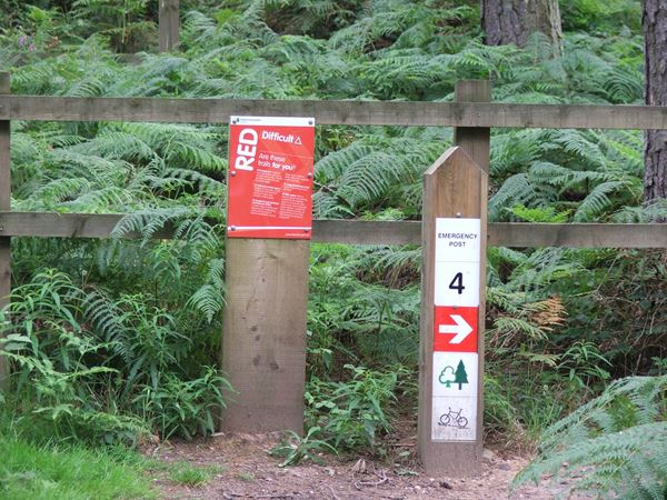 Image, UK, England, Notts, Sherwood Pine Forest