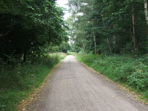 Image, UK, England, Notts, the road between Sherwood Pine Forest and Rufford