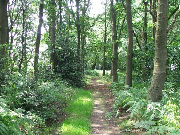 Image, UK, England, Notts, Robin Hood Way between Sherwood Pine Forest and Lidget