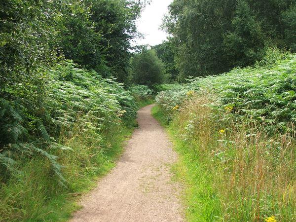 Image, UK, England, Notts, South border of the Sherwood Forest
