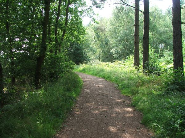 Image, UK, England, Notts, South border of the Sherwood Forest