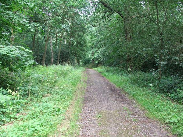 Image, UK, England, Notts, South West corner of the Sherwood Forest