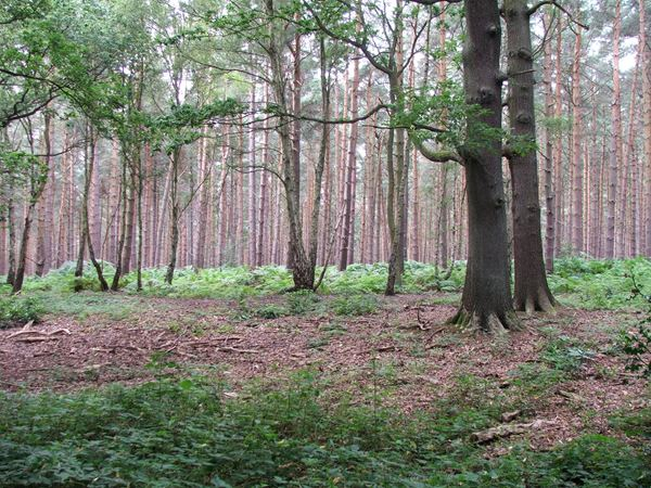 Image, UK, England, Notts, South West corner of the Sherwood Forest