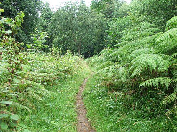 Image, UK, England, Derbyshire, Archaeological Way the Scarcliffe Park