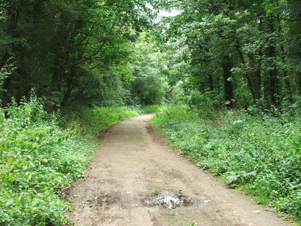 Image, UK, England, Notts, Robin Hood Way, the North of the Welbeck Abbey