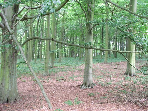 Image, UK, England, Notts, Welbeck Park, Robin Hood Way (Drinking Pit Lane)