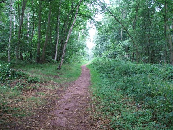 Image, UK, England, Notts, Robin Hood Way between Ollerton Road and Truman's Lodge (Clumber Park)