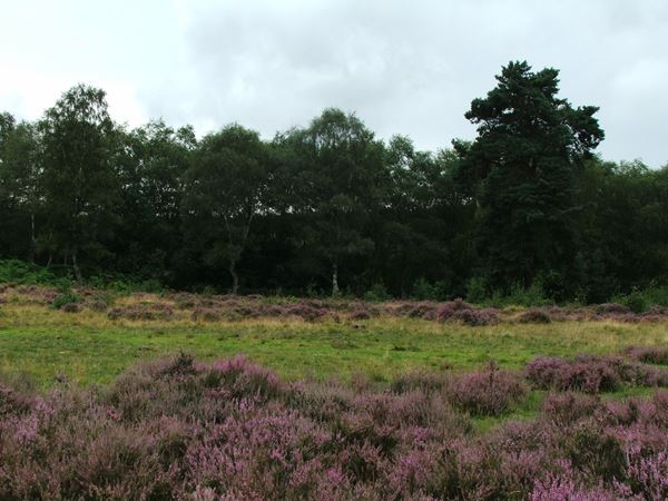 Image, UK, England, Notts, the North West corner of the Clumber Park