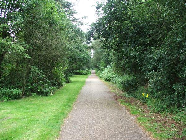 Image, UK, England, Notts, Clumber Park, route 6 between Limetree Avenue and Clumber Bridge