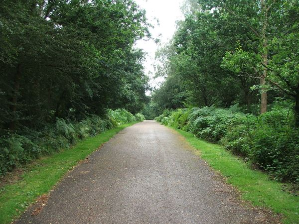 Image, UK, England, Notts, Clumber Park, route 6 between Limetree Avenue and Clumber Bridge