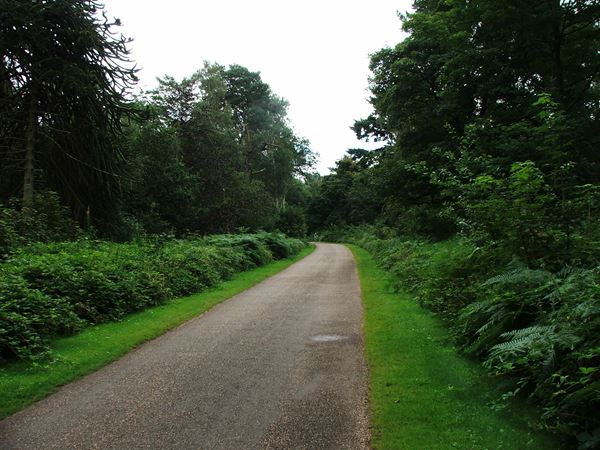 Image, UK, England, Notts, Clumber Park, route 6 between Clumber Bridge and South Lodge