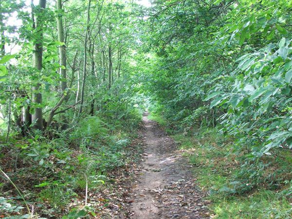 Image, UK, England, Notts, Robin Hood Way, Gleadthorpe Breck Plantation