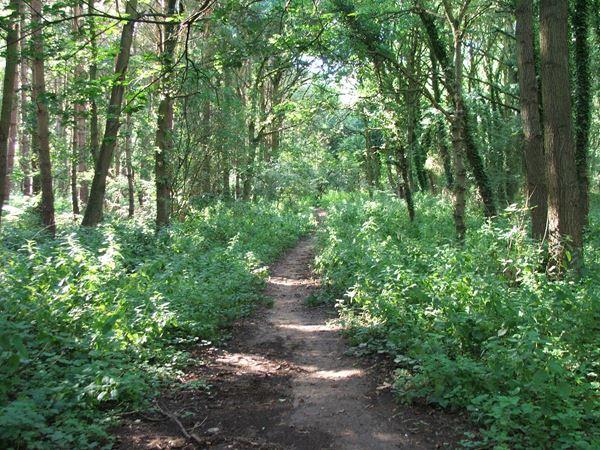 Image, UK, England, Notts, Robin Hood Way, Gleadthorpe Plantation