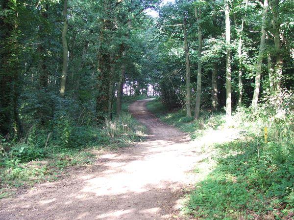 Image, UK, England, Notts, Robin Hood Way, Holborn Hill Plantation