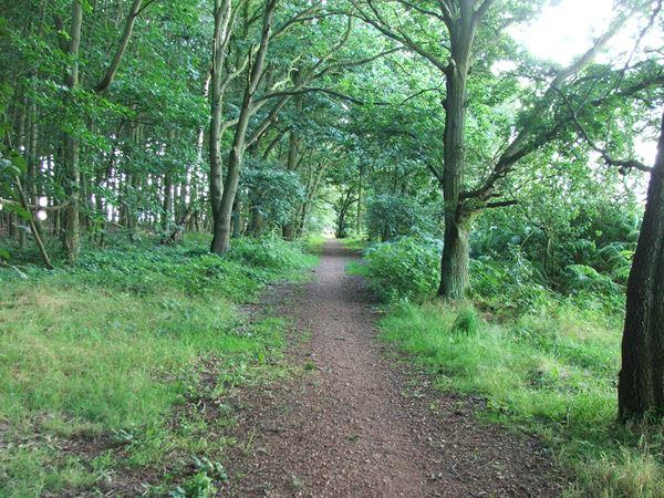 Image, UK, England, Notts, Robin Hood Way, Gleadthorpe New Plantation