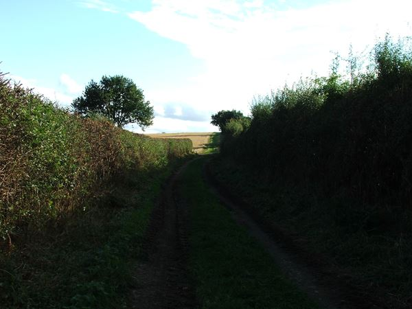 Image, UK, England, Notts, public foot path between North West corner of the Sherwood Forest and Market Warsop