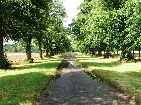 Image, UK, England, Notts, Welbeck Abbey, Robin Hood Way, the South border of the Deer Park