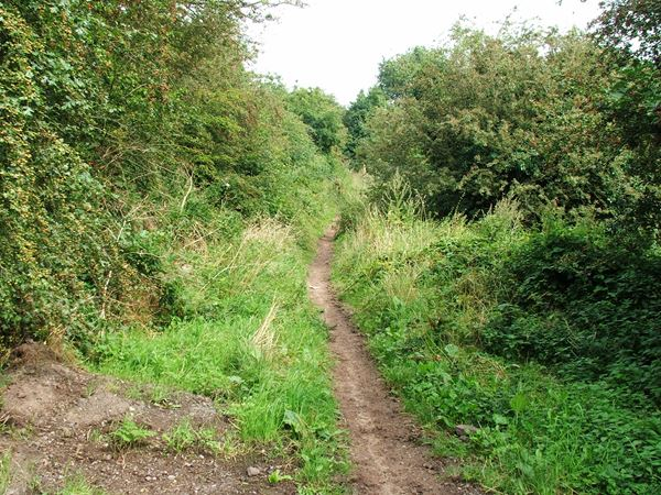 Image, UK, England, Notts, public foot path from along the bank of the River Maun to Clipstone