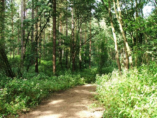 Image, UK, England, Notts, public foot path from the River Maun to Clipstone Drive
