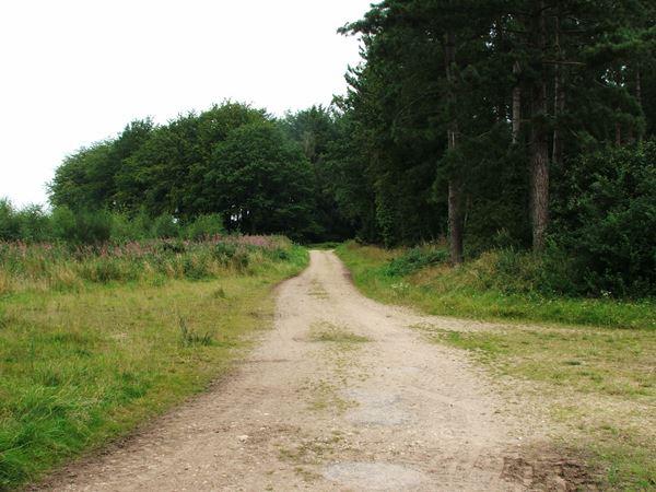 Image, UK, England, Notts, public foot path Clipstone Drive