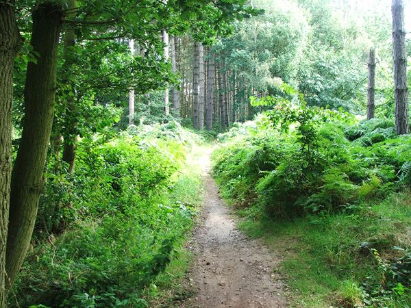 Image, UK, England, Bassetlaw, public foot path from Old Coach Road to Clumber Old Wood