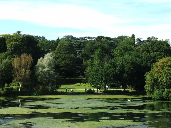 Image, UK, England, Bassetlaw, Clumber Park the South bank of the Clumber Lake