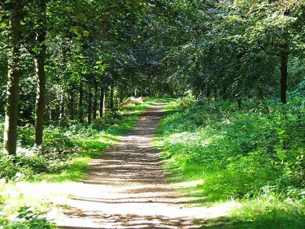 Image, UK, England, Bassetlaw, Clumber Park, foot path from Clumber Bridge to South Lodge