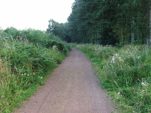 Image, UK, England, Notts, route 6 from Kingstand Lodge to Sherwood Forest