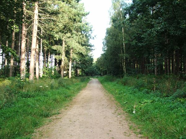 Image, UK, England, Notts, the North of the Sherwood Forest, public foot path between Holborn Hill Plantation and Boundary Plantation