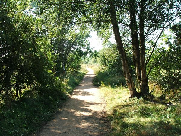 Image, UK, England, Notts, Skegby Trail