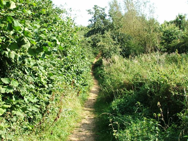 Image, UK, England, Derbyshire, Pleasley Pit Country Park