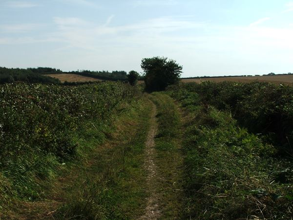 Image, UK, England, Derbyshire, public foot path Greer Lane