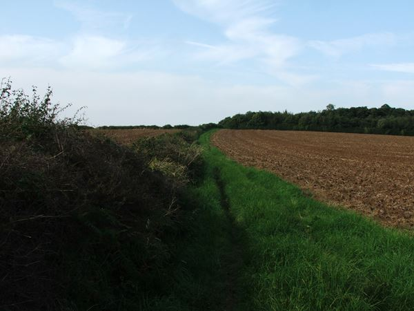 Image, UK, England, Derbyshire, Archaeological way near Roseland Wood