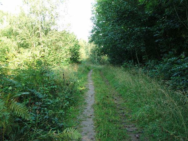 Image, UK, England, Derbyshire, Archaeological way Roseland Wood