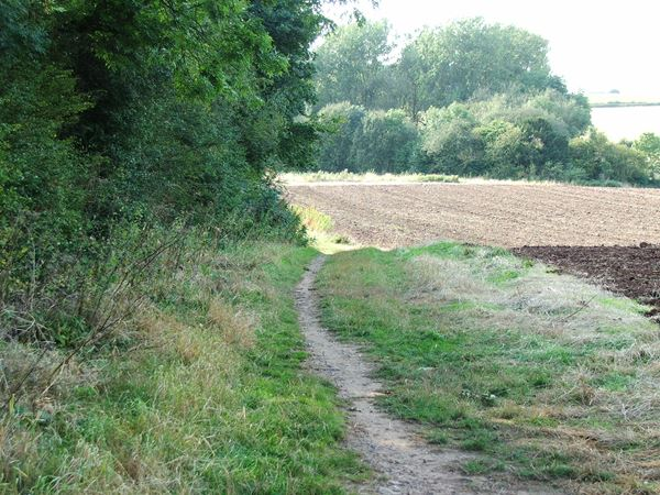 Image, UK, England, Derbyshire, Archaeological way between Roseland Wood and Langwith Wood