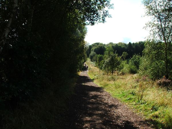 Image, UK, England, Notts, route 6 The West border of the Budby South Forest
