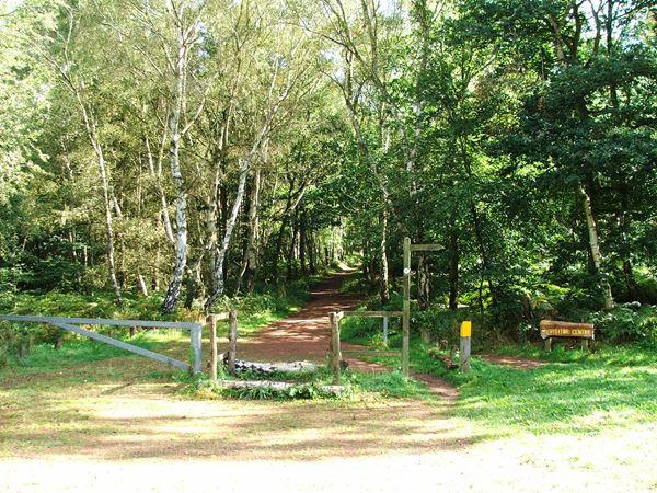 Image, UK, England, Notts, route 6 Hanger Hill Wood