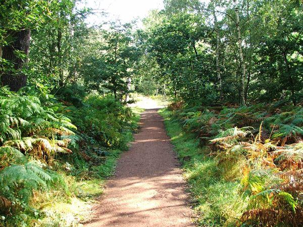 Image, UK, England, Notts, public foot path Sherwood Forest