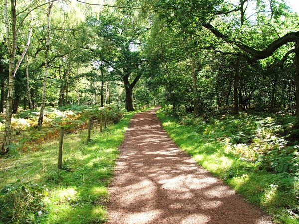 Image, UK, England, Notts, public foot path Sherwood Forest