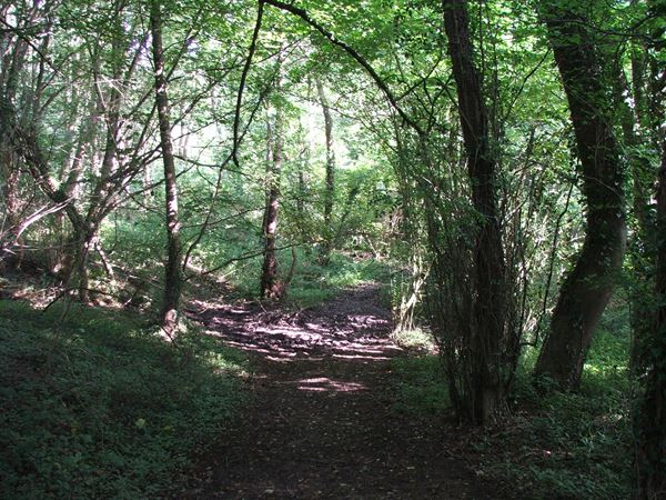 Image, UK, England, Derbyshire, Archaeological way Scarcliffe Park
