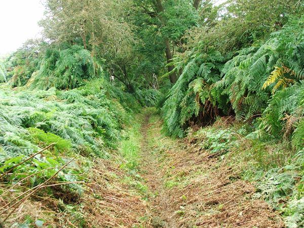 Image, UK, England, Notts, Sandy Lane (Path)